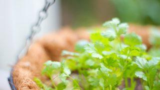 100均利用ベランダ家庭菜園